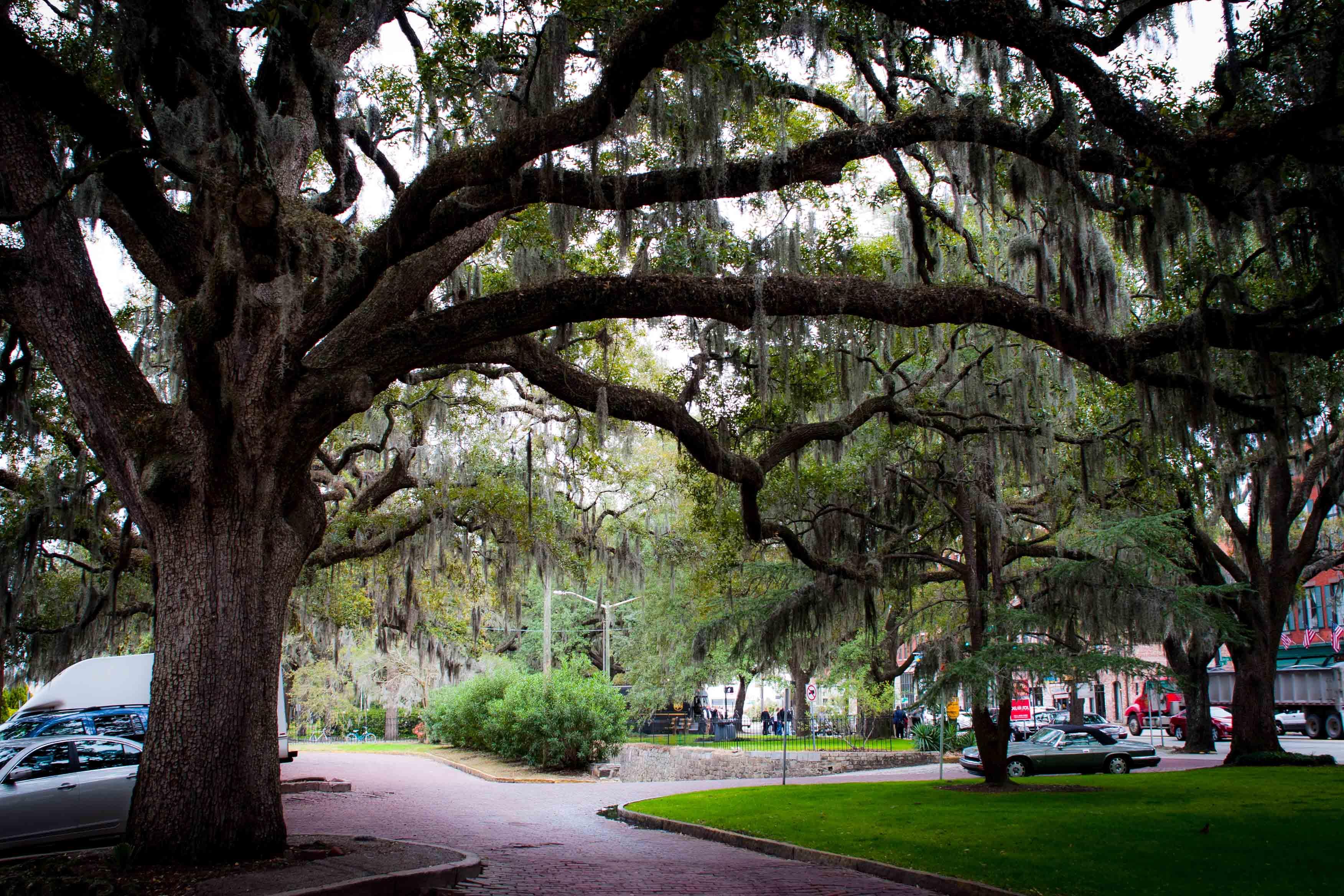 Savannah, ses arbres et sa météo exceptionnelle!