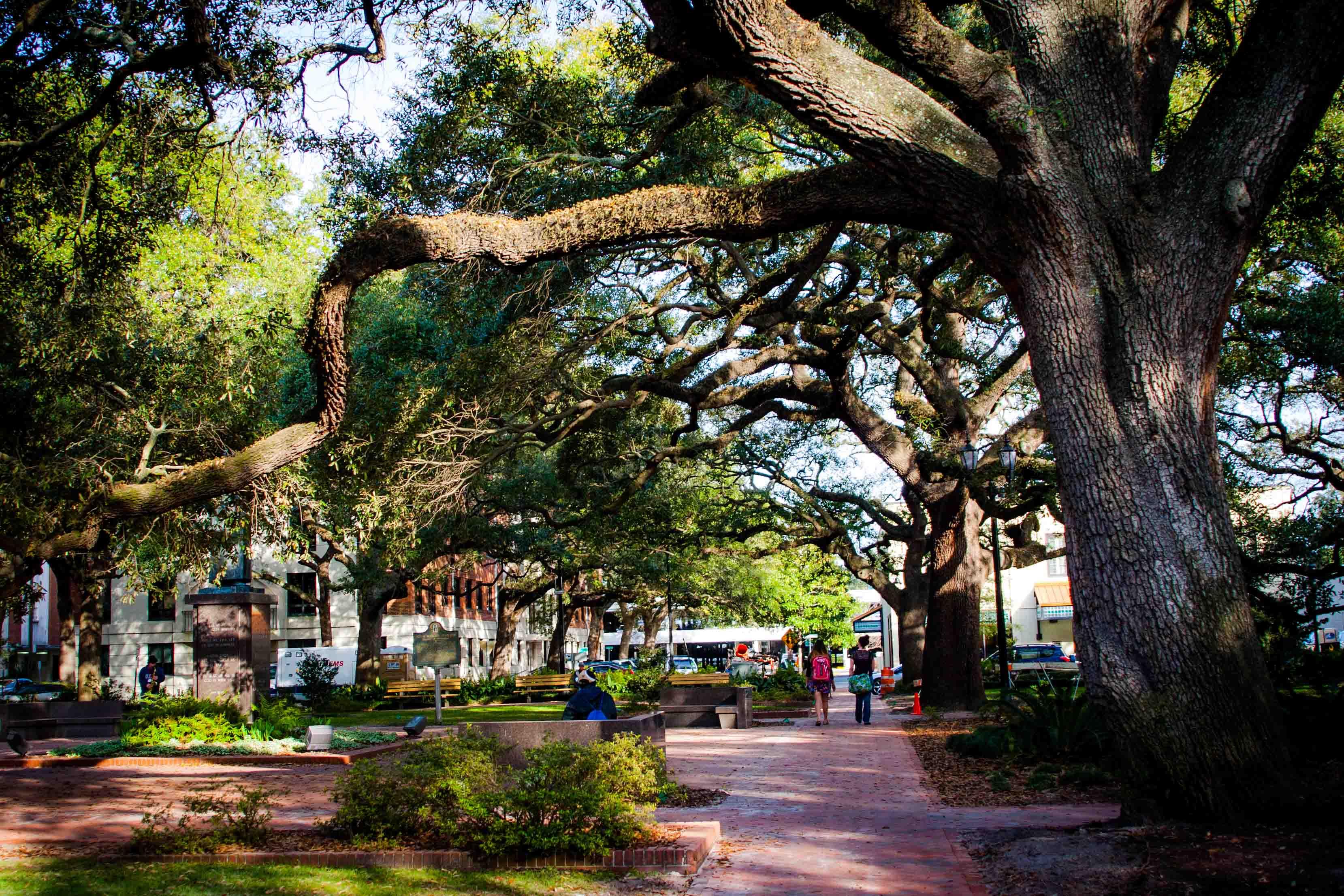 Savannah et ses arbres qui font rêver.