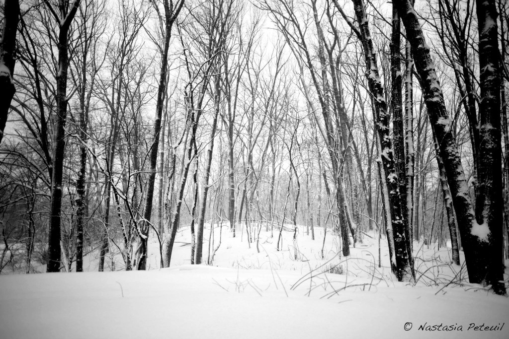 L'hiver dans le Michigan